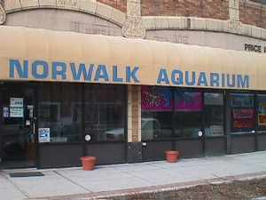 The Norwalk Aquarium